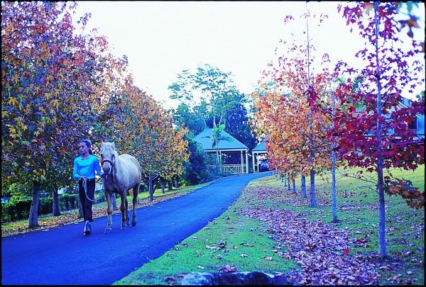 Ewingsdale_horse